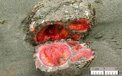 سنگ های زنده