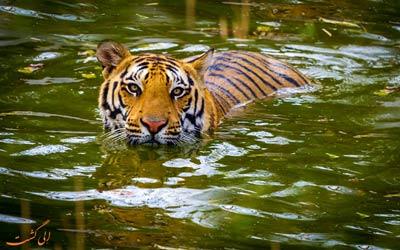 بهترین پارک های ملی هند