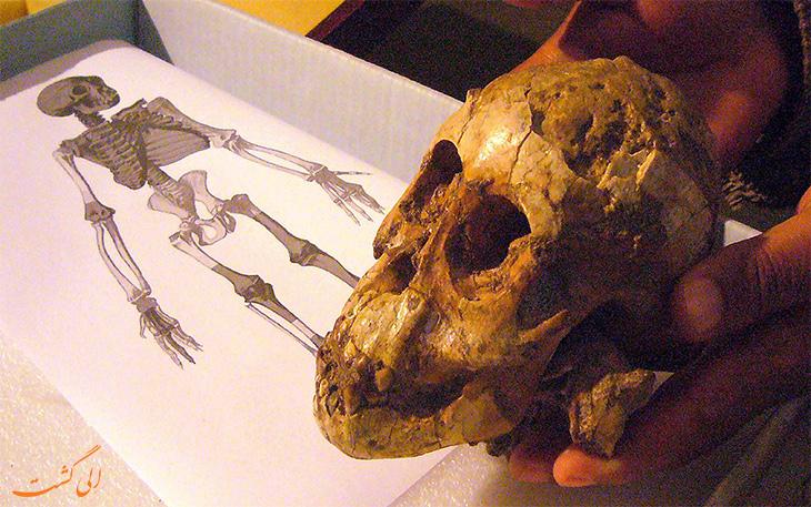 جمجمه فسیل 3.3 میلیون ساله