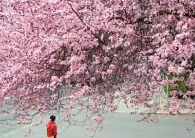 طبیعت گردی در بهار
