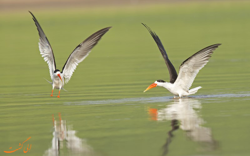 تور های عکاسی حیات وحش- پرندگان