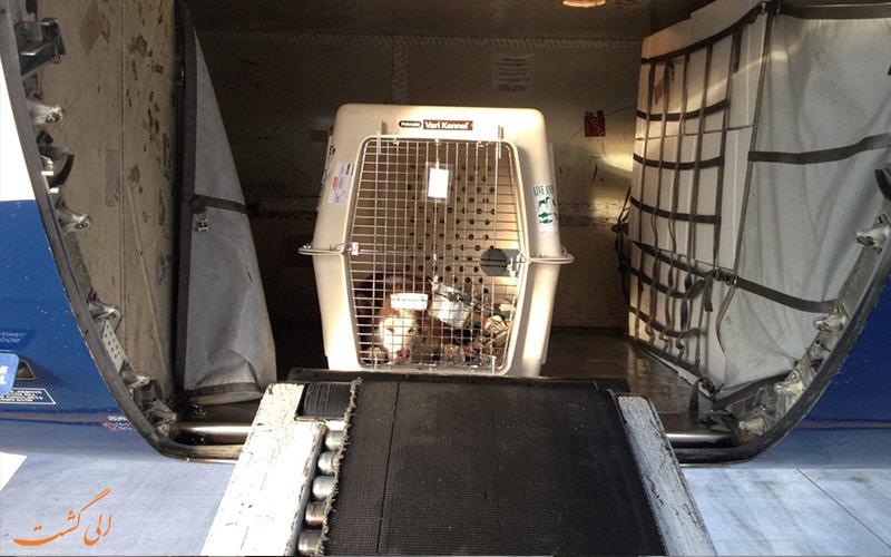 حیوانات خانگی در قسمت بار هواپیما