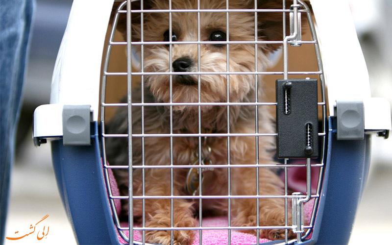 بردن حیوانات خانگی در هواپیما