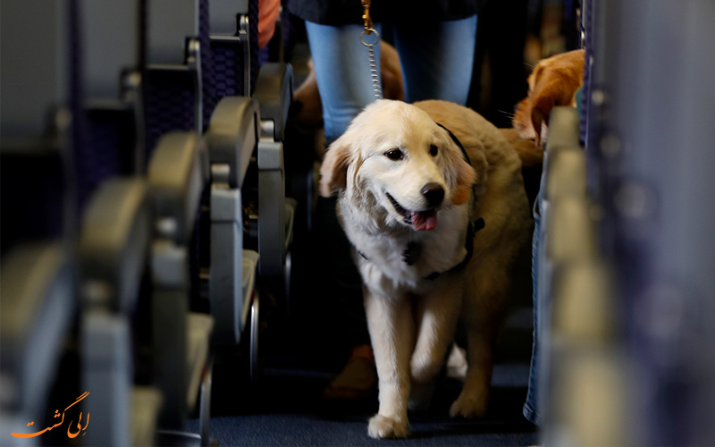 حیوانات خانگی در هواپیما