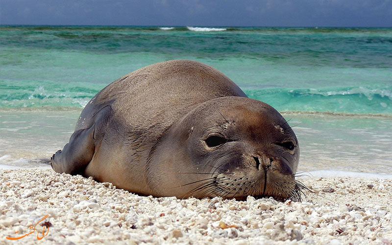 فک خزری-تنها پستاندار دریای خزر