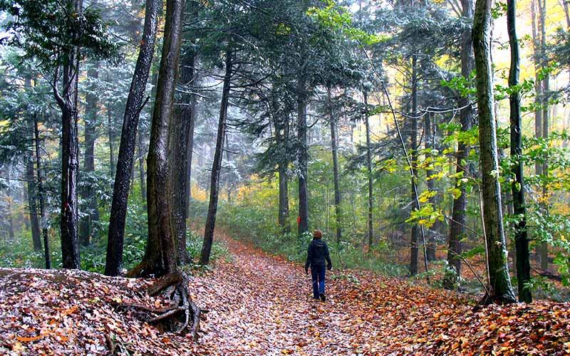 گم شدن در جنگل