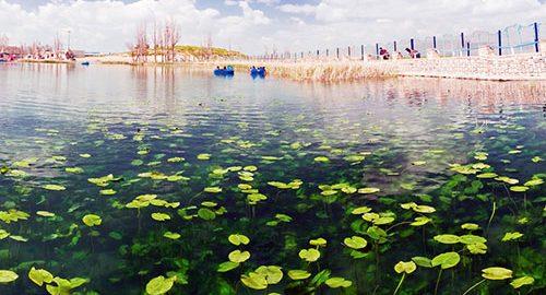 دریاچه سرآب نیلوفر کرمانشاه