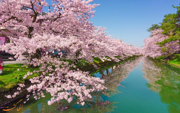 فستیوال فانوسهای شکوفهی گیلاس ژاپن