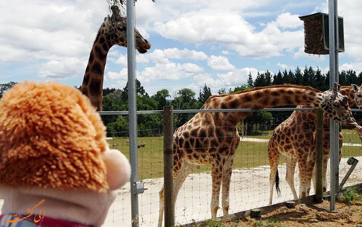 باغ وحش هامیلتون