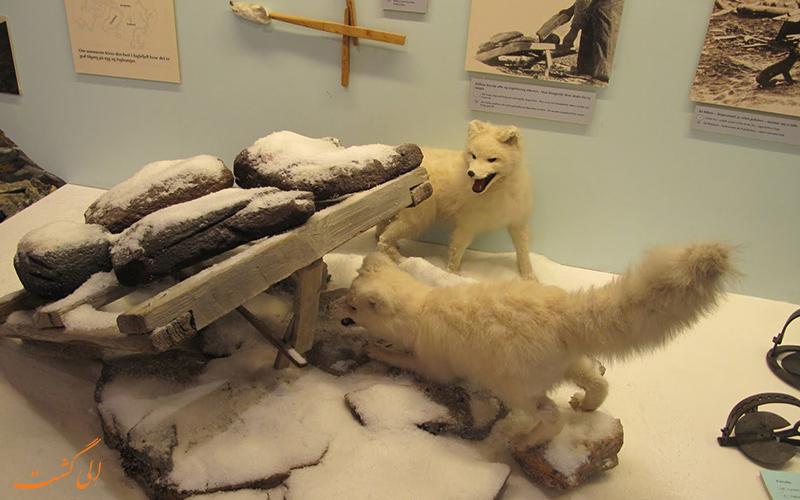 موزه قطبی