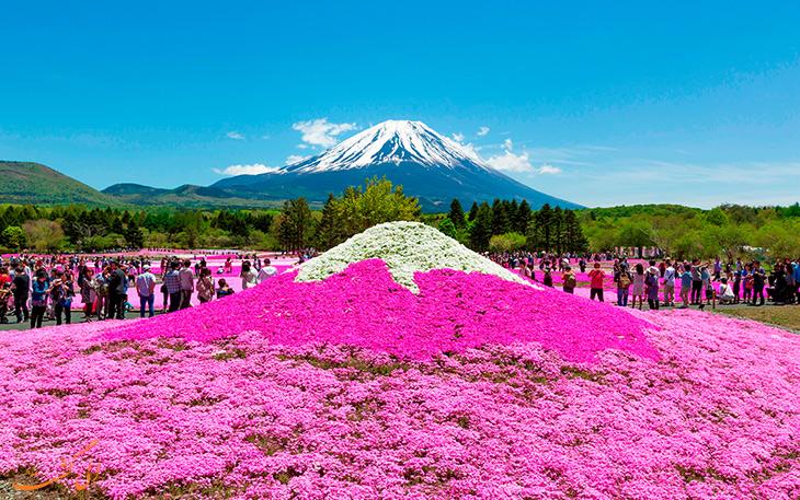 فستیوال فوجی شیبازاکورا ژاپن