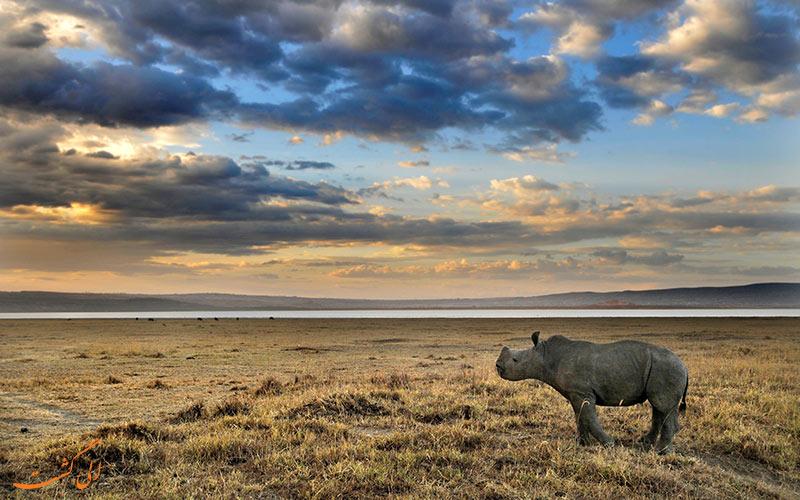 ماجراجویی در کنیا