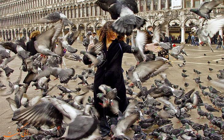 غذا دادن به پرنده ها