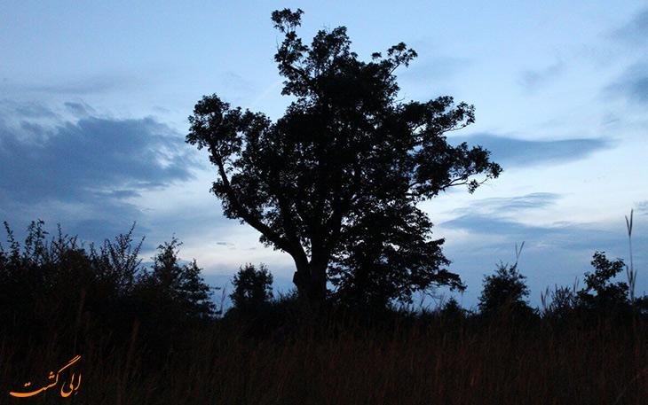 ترسناک ترین درخت دنیا