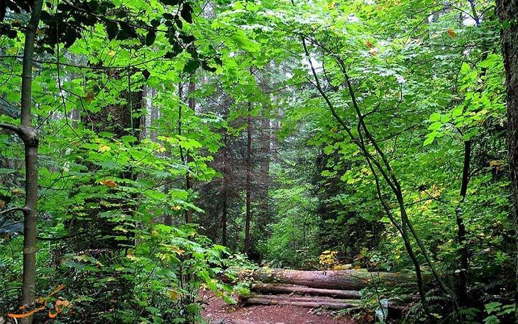 جنگل های شمال