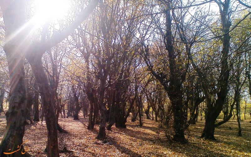 جنگل تلار