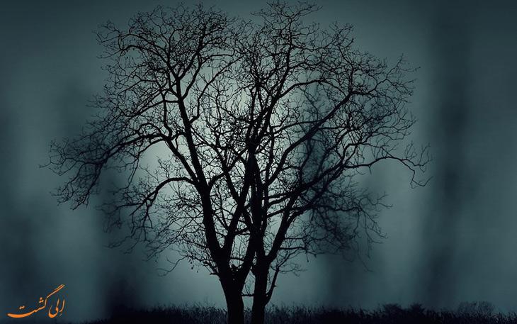 درخت نفرین شده