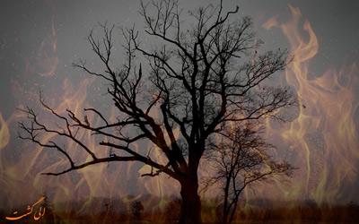 درخت شیطان در نیوجرسی