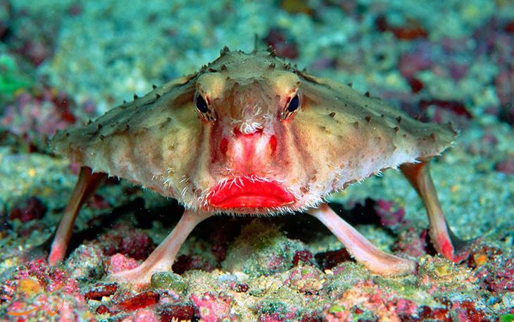 ماهی با لب های قرمز