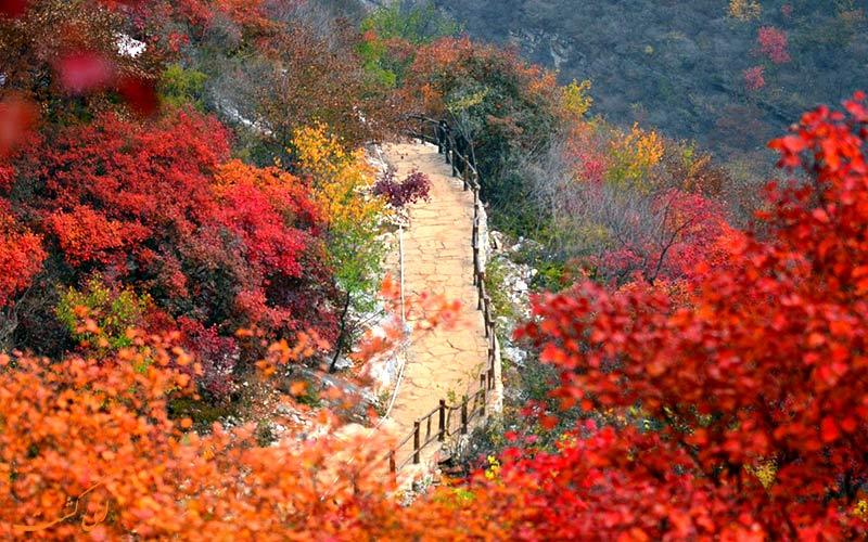 سفر به چین در پاییز