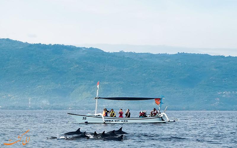 تماشای دلفین ها در بالی
