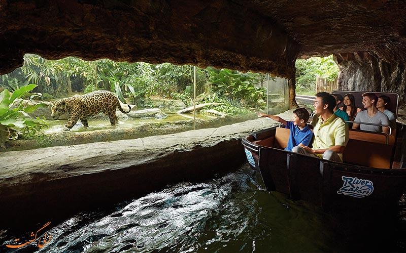 سافاری باغ وحش سنگاپور