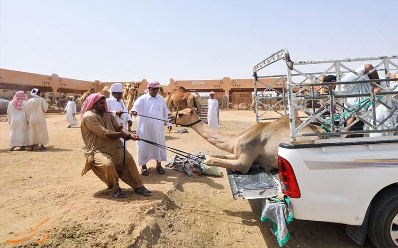 سفر 7 روزه به دبی-العین