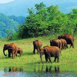 به سافاری منطقه حفاظت شده باگوان ماهاویر گوا در هند بروید