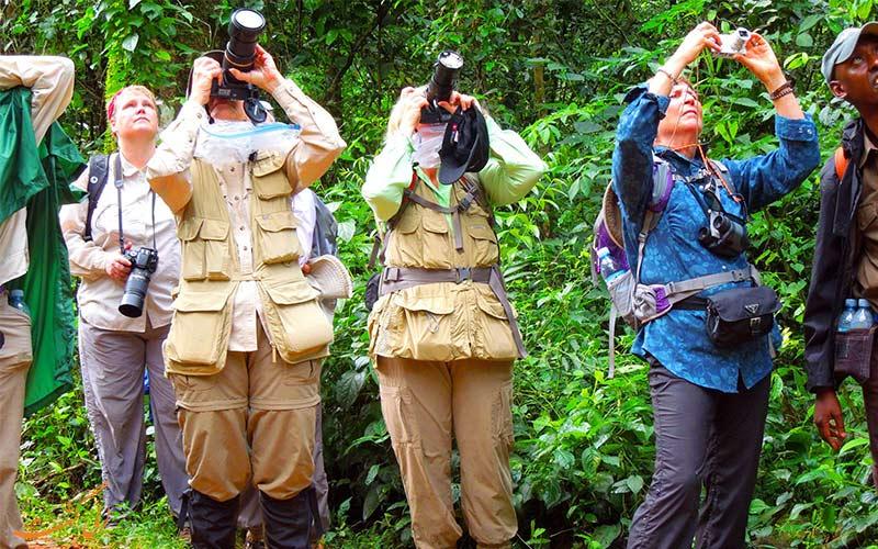 نکات سفر به جنگل های بارانی
