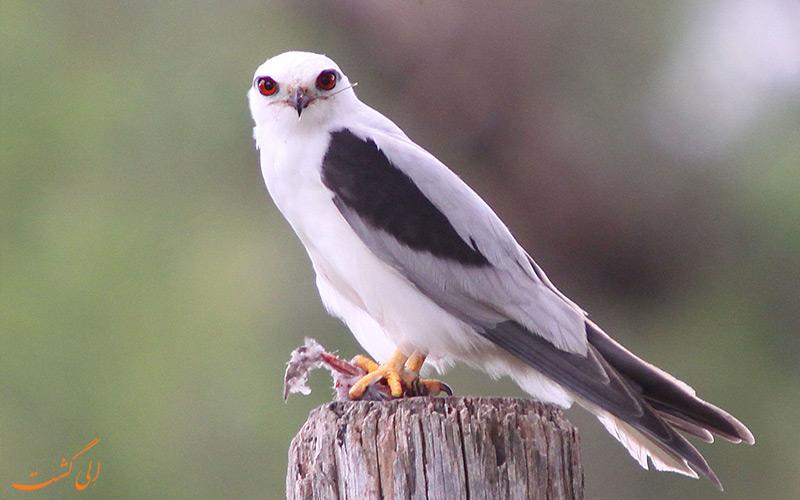 تور پرندگان در هند