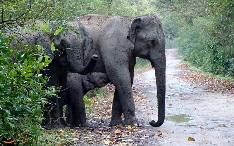 پارک ملی هند