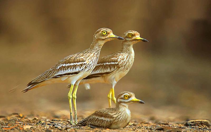 پارک ملی جیم کاربوت هند و پرندگان