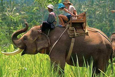 پارک ملی جیم کاربوت هند-الی گشت