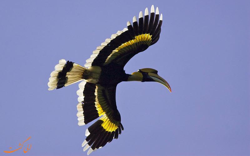 پارک ملی جیم کاربوت و پرندگان