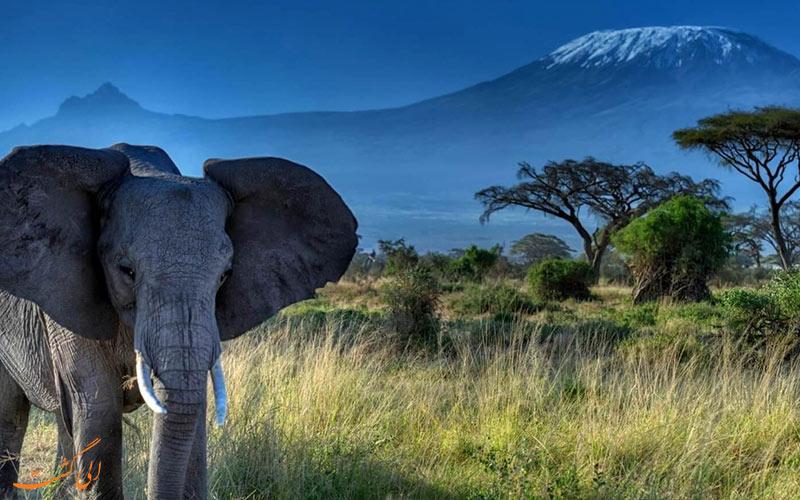 کوه های کلیمانجارو در تانزانیا