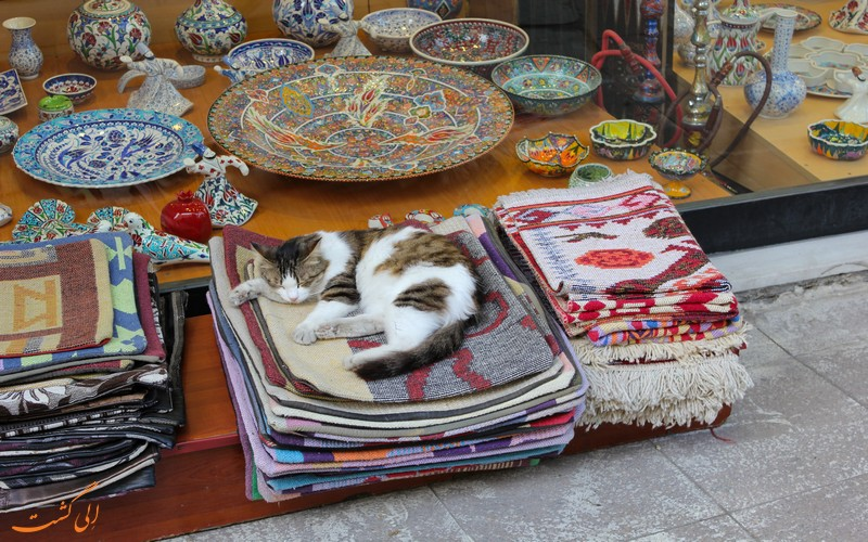 زندگی گربه ها در شهر استانبول