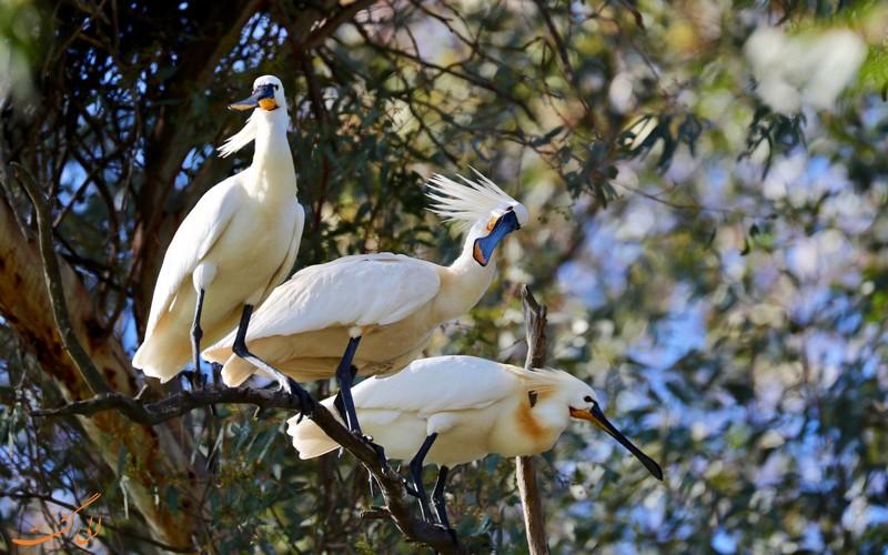 پرنده نگری در پارک دونیانا