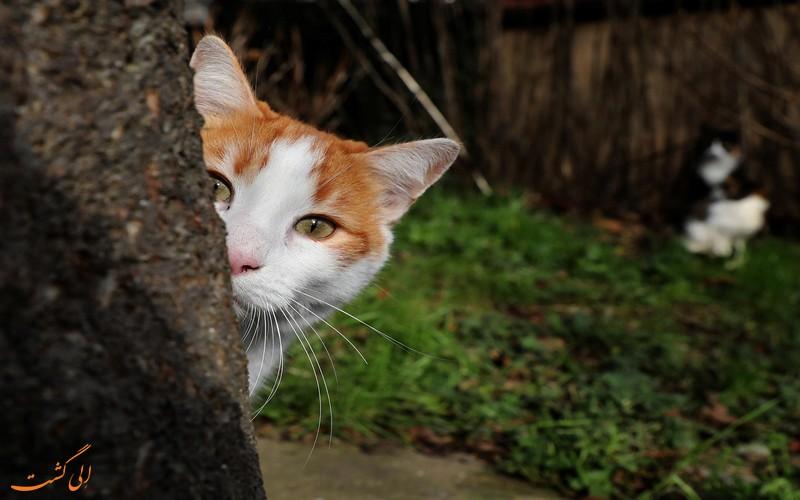 حمایت از گربه ها