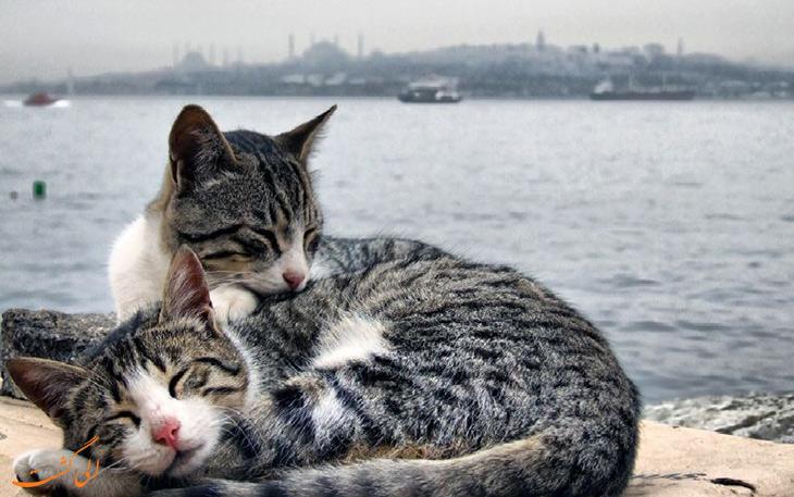گربه در اسلام