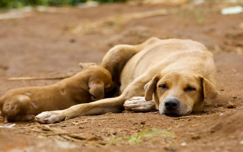 کمک به پناهگاه حیوانات