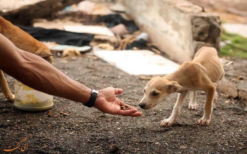 انجمن های حمایت از حیوانات در ایران