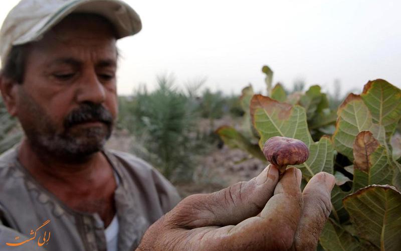 گردشگری کشاورزی در ایران