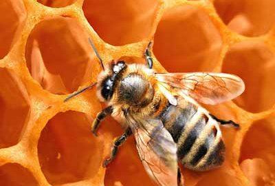 بهترین عسل های ایران-الی گشت