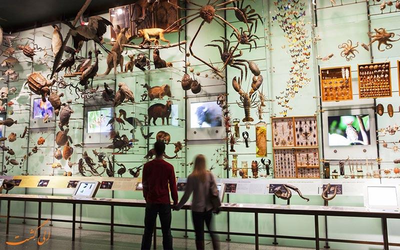 موزه تاریخ طبیعی آمریکا