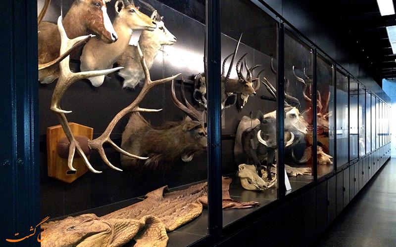 موزه بیوتی