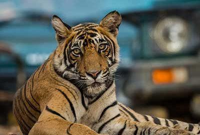 الی گشت-پارک ملی رامتانبور هند
