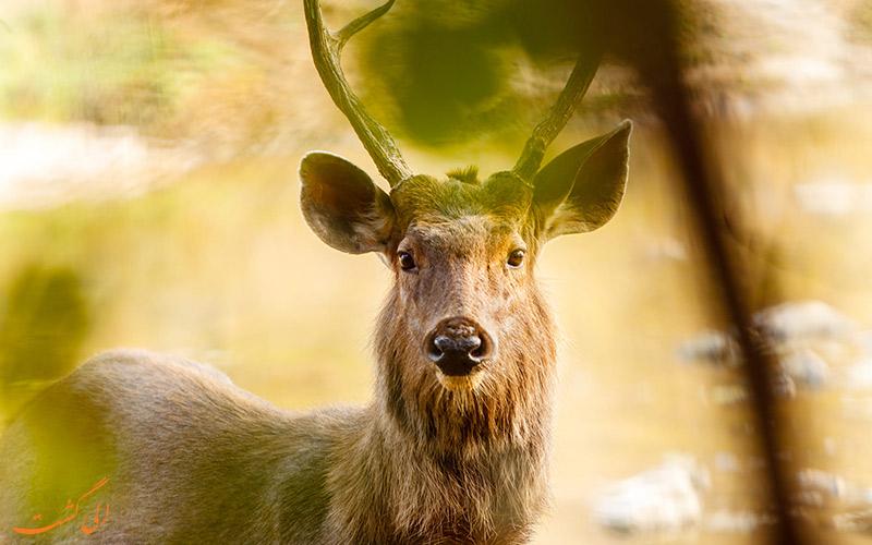 دیدن گوزن در پارک ملی هند