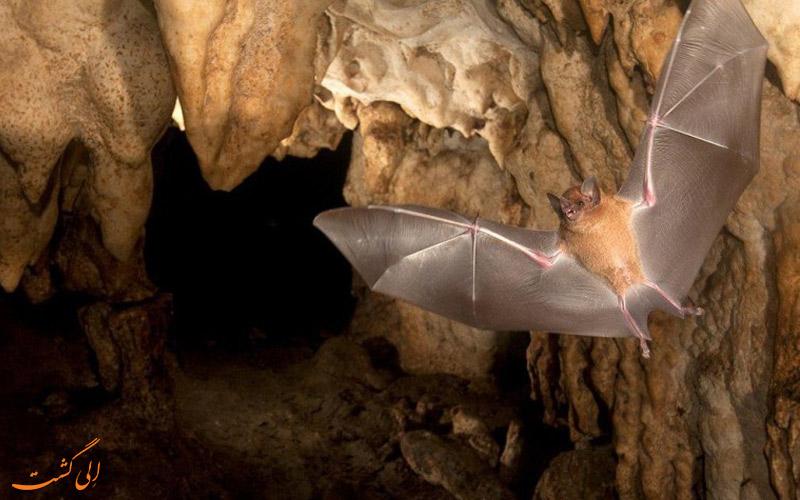 غار-کارده