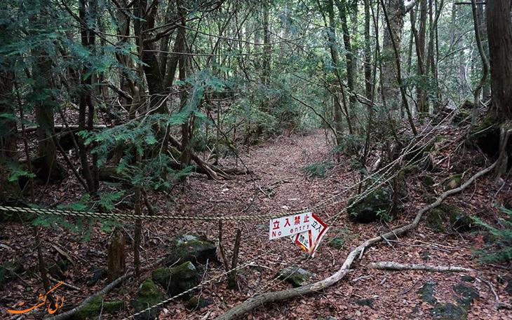 جنگل اکیگاهارا