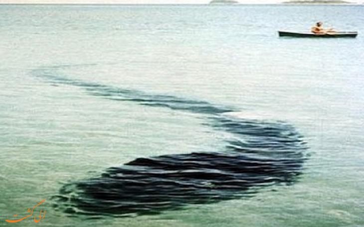 هیولای جزیره هوک